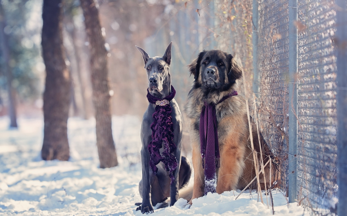 Повышаем мастерство • Зимняя фотосъемка животных - Фотошкола